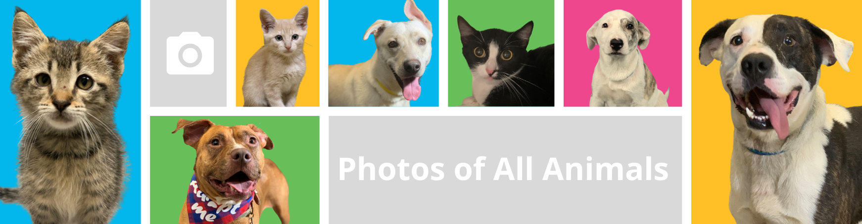 pictures-of-all-animals-banner