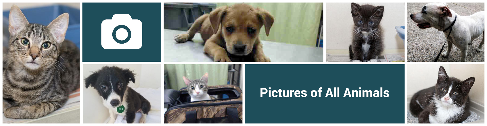 Pictures Of All Animals Adopt Veterinary Public Health Harris County Public Health Texas